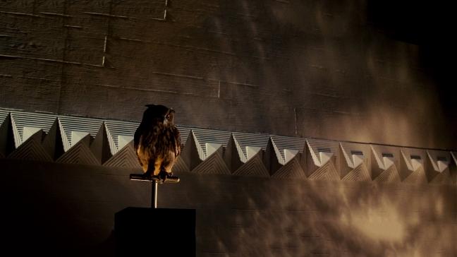 BladeRunner-Owl-1920x1080